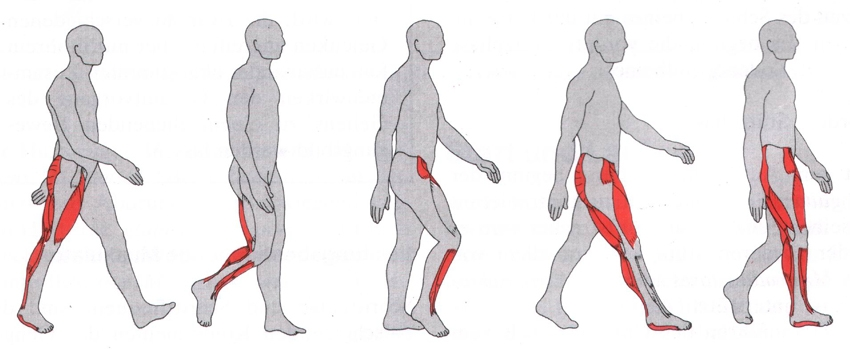 gesäßmuskel schmerzen was tun